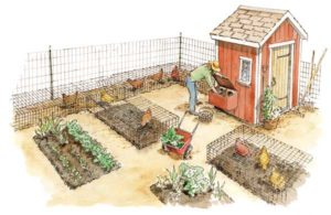 Cover photo for EBCI 4-H Garden and Chicken Project - at Home During COVID-19