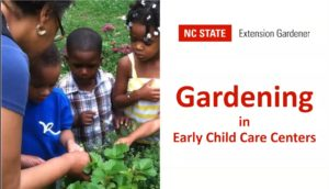 Cover photo for Growing Vegetables in Early Child Care Centers