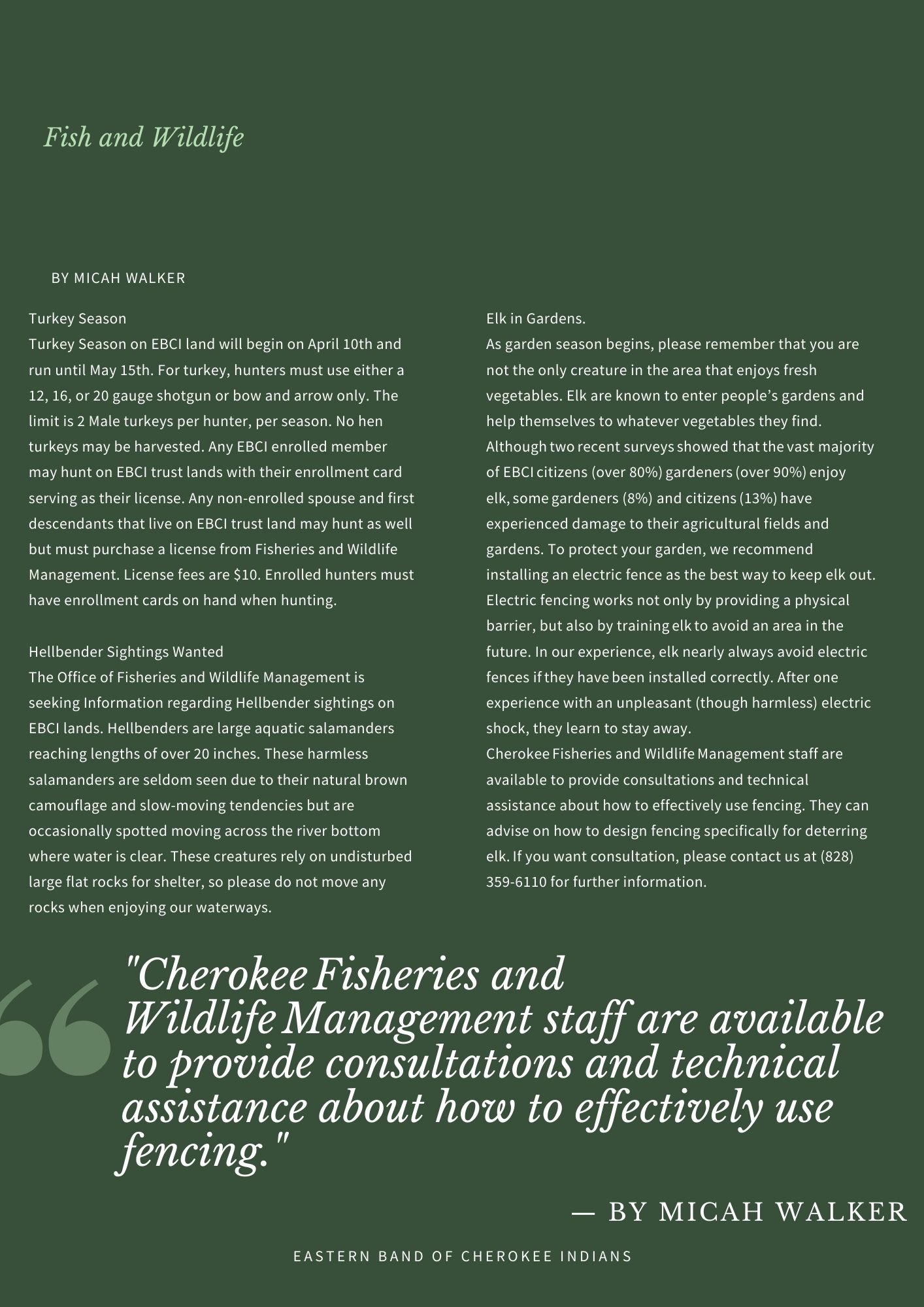 Fish and Wildlife Newsletter Articles April 2021 By: Micah Walker Turkey Season Turkey Season on EBCI land will begin on April 10th and run until May 15th. For turkey, hunters must use either a 12, 16, or 20 gauge shotgun or bow and arrow only. The limit is 2 Male turkeys per hunter, per season. No hen turkeys may be harvested. Any EBCI enrolled member may hunt on EBCI trust lands with their enrollment card serving as their license. Any non-enrolled spouse and first descendants that live on EBCI trust land may hunt as well but must purchase a license from Fisheries and Wildlife Management. License fees are $10. Enrolled hunters must have enrollment cards on hand when hunting. Hellbender Sightings Wanted The Office of Fisheries and Wildlife Management is seeking Information regarding Hellbender sightings on EBCI lands. Hellbenders are large aquatic salamanders reaching lengths of over 20 inches. These harmless salamanders are seldom seen due to their natural brown camouflage and slow-moving tendencies but are occasionally spotted moving across the river bottom where water is clear. These creatures rely on undisturbed large flat rocks for shelter, so please do not move any rocks when enjoying our waterways. Elk in Gardens As garden season begins, please remember that you are not the only creature in the area that enjoys fresh vegetables. Elk are known to enter people's gardens and help themselves to whatever vegetables they find. Althoughtworecent surveysshowed thatthevast majority of EBCIcitizens (over 80%)gardeners(over 90%)enjoy elk,somegardeners (8%) and citizens(13%)have experienced damage to their agricultural fields and gardens. To protect your garden, we recommend installing an electric fence as the best way to keep elk out. Electric fencing works not only by providing a physical barrier, but also by trainingelkto avoid an area in the future. In our experience, elk nearly always avoid electric fences ifthey havebeen installed correctly. After one experience wi