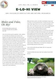Moles and Voles, Oh My! — Written By Rob Hawk and updated by Melissa Vaughn and Chumper Walker Woodland or Pine Vole rodent Voles eat roots from garden vegetables, bulbs, and bark. You most likely deal with pine and meadow voles. Meadow voles spend most of their time above ground while pine/woodland voles are more burrow dwelling and usually have an extensive subsurface trail system that is excavated about 1 to 2 inches deep. These burrows open to the surface and often connect to above-ground runways. These burrows are small since voles are the size of plump mice. They can be a serious outdoor pest, damaging the root system on many landscape and garden plants or even girdling trees when feeding on their bark. The best way to control a vole epidemic is to set large spring loaded mice traps baited with apple slices or peanut butter near the tunnels. You can also discourage voles from invading your yard by keeping the grass mowed short and reducing the amount of thatch in the lawn. There are also poisons that can be used to kill voles but one must consider potential risks with pets, children, or non-target animals. Read the label in its entirety before using any vole poison products to avoid illegal usage and/or unintended harms. Mole Moles have large paddle-like forefeet used for digging. Image by Michael David Hill, Wikimedia Moles eat insects, worms, and other invertebrates living in your soil. Moles are not considered rodents. The tell-tale sign of moles is the visible ridges that are seen as a result of tunneling in the lawn. There is a tendency to try to control moles by applying grub killer to your lawn. Sometimes this isn't a recommended approach since moles eat more than just grubs. The star-nosed mole, found mostly in the mountains and coastal plains, is listed as a NC Special Concern Specie and is protected by law. Reference NC law 15A NCAC 10B .0106 WILDLIFE TAKEN FOR DEPREDATIONS, found on the NCDA website for more info. The eastern mole and the hairy-tail